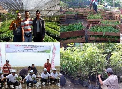 supplier pohon dan bibit tanaman